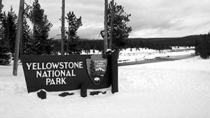 Yellostone National Park