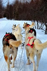huskies-en-canada
